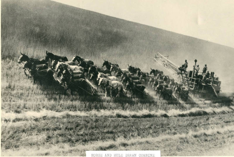 Farming Practices of Settlers