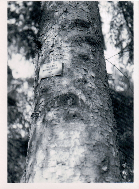 Tree trunk and label circa 1951
