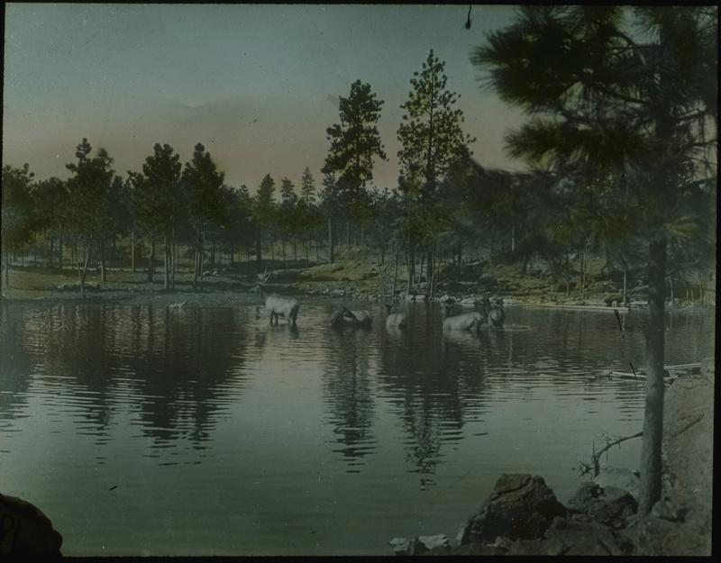 Elk Pond - Zoo Years 1905-1932
