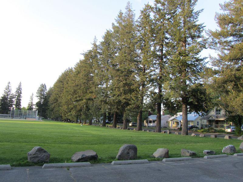 Underhill Trees