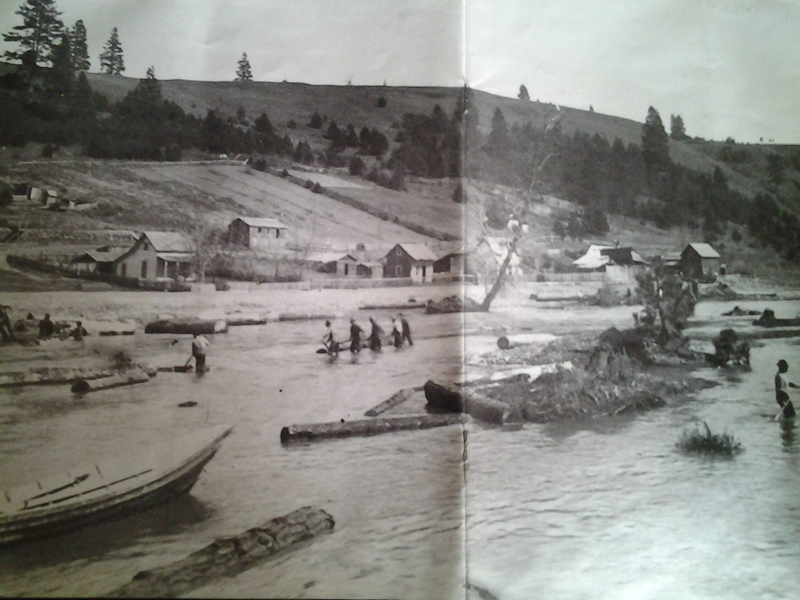 Logs Floating on the Palouse in Elberton,1905