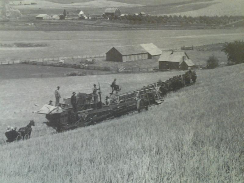 Threshing Wheat in Seltice,1899