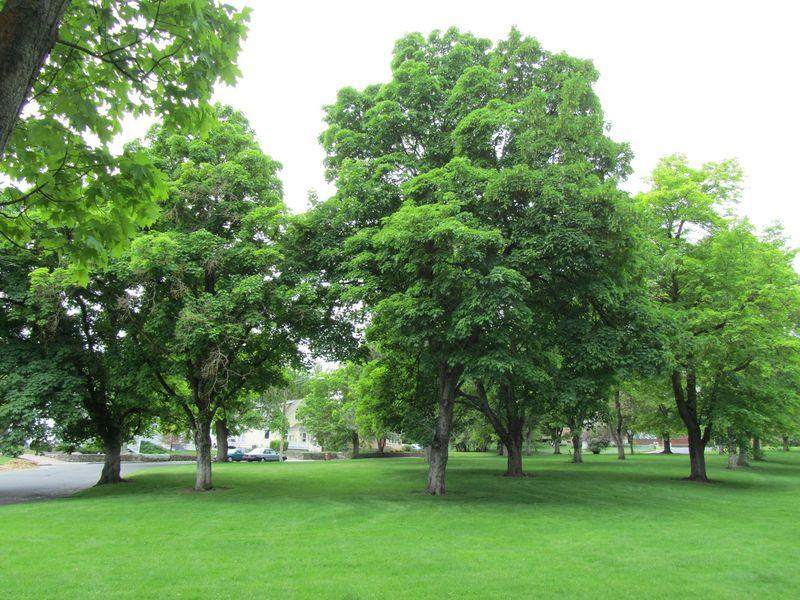 Grant Park - Stadacona Circle addition
